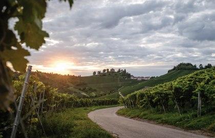 Vineyards / Grabkapelle, © Stuttgart-Marketing GmbH